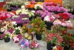 Flower stall at Eveleigh Markets