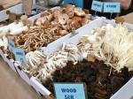 Mushroom guy at Eveleigh Market